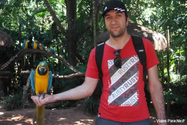 guacamayo parque das aves
